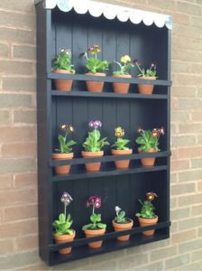 Primula And Auricula Hillview Hardy Plants